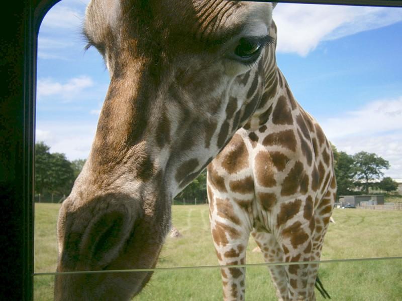 Anglophiles, Safari Experience (8 – 17 лет)